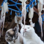 Кальмары кошкам — можно ли их давать?