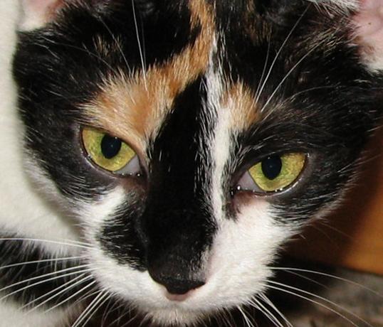 Проблемы с веком у кошки