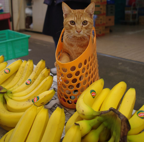 Кошка и много бананов