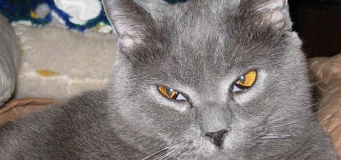 У серого кота третье веко