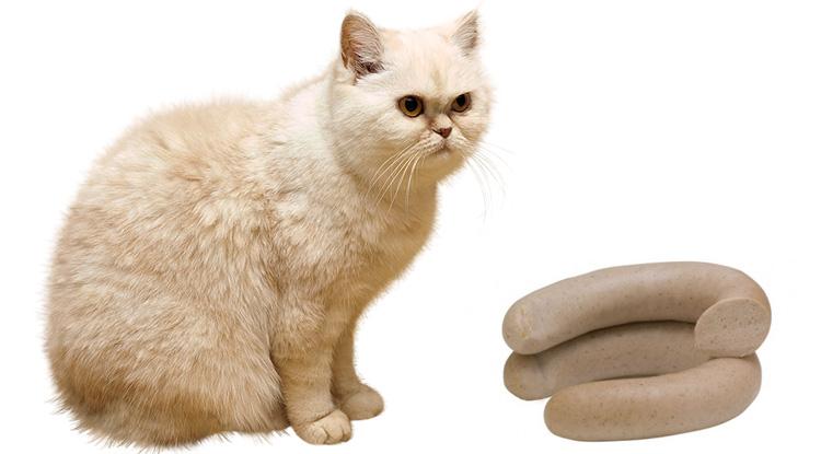 Кот и ливерная колбаса