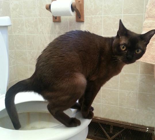 Кот тужится