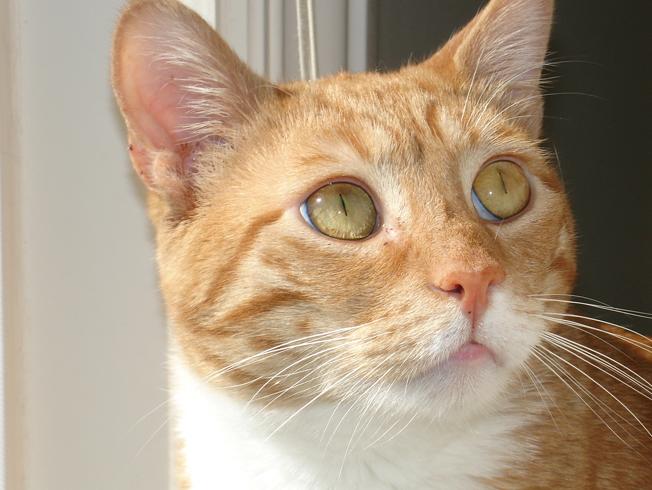 Нездоровый нос у кота