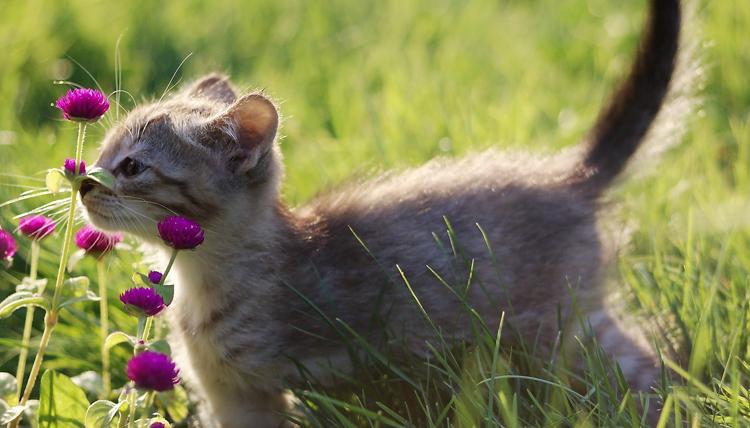 Котенок в травке
