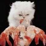 Креветки кошкам: можно ли давать, польза и вред