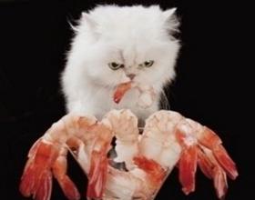 Креветки кошкам