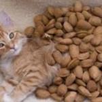 Орехи кошкам: можно ли давать, польза и вред