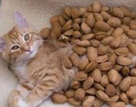 Орехи кошкам
