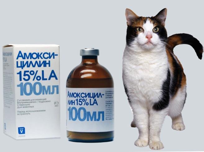 Препарат для кошек