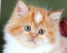 Какую кличку выбрать рыжему коту
