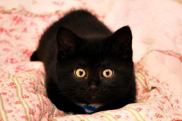 Смешной черный кот