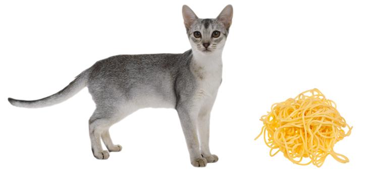Кошка и макароны
