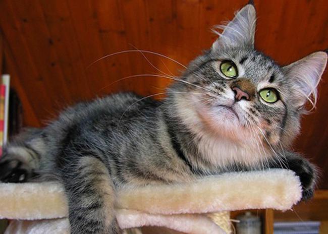 Кот с отравленной мышью