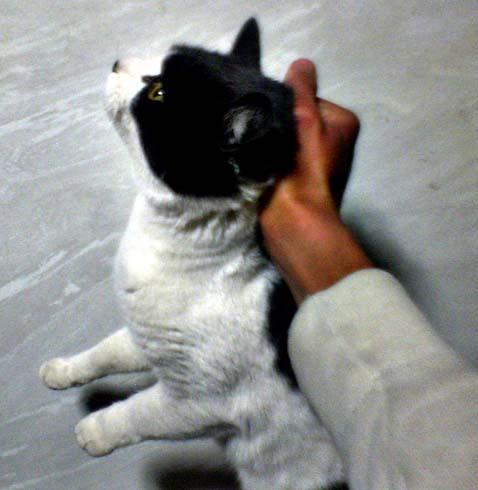 Кота берут за шкирку