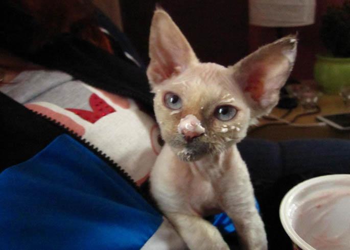 Кошка после йогурта