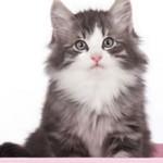 Если моча кота пахнет аммиаком — причины, чем это опасно и что делать
