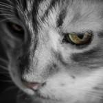 Поликистоз почек у кошек: симптомы, лечение и прогноз