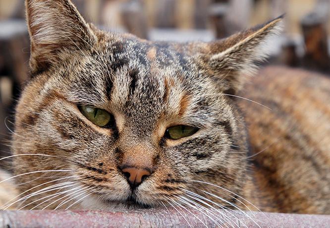 Вялый кот
